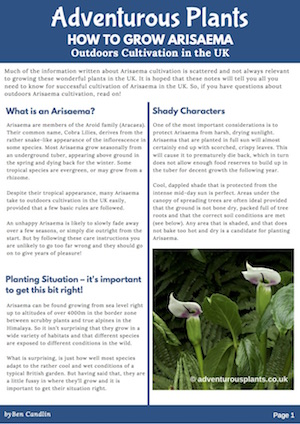 Adventurous Plants Cultivation Advice - How to Grow Arisaema