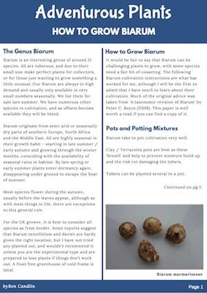 Adventurous Plants - How to Grow Biarum