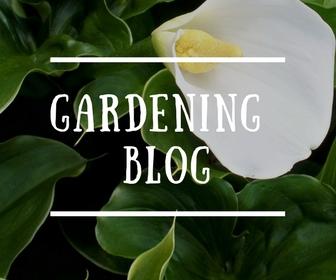 Adventurous Plants Gardening Blog with Ben Candlin The Aroid Specialist